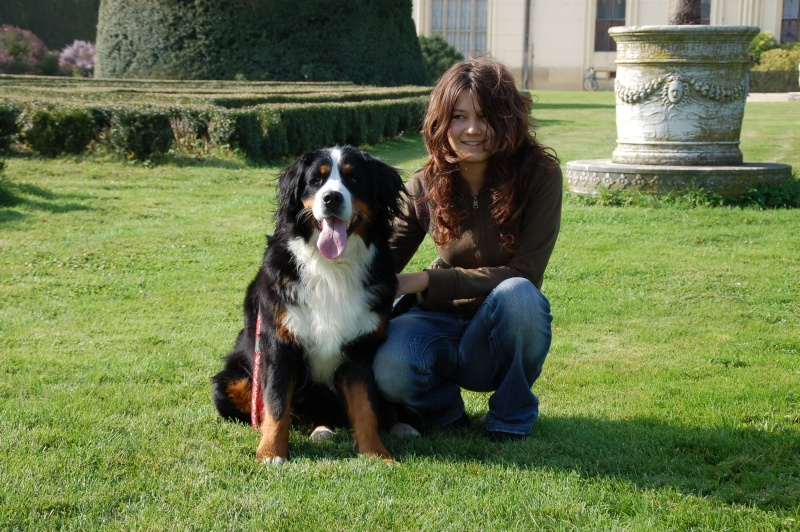 bernese mountain dog size bernese mountain dog bernese mountain dogs
