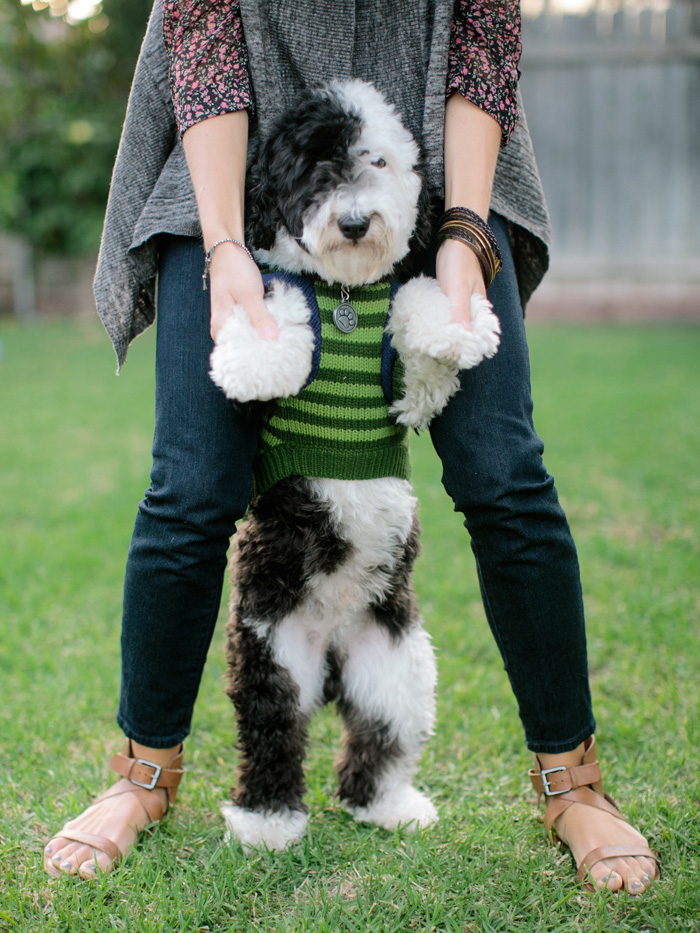 Related Keywords & Suggestions for mini sheepadoodle