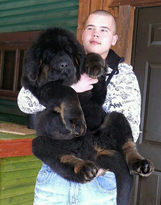 Big Dog Breeds And Gentle Giants: Which One Is Right For You?