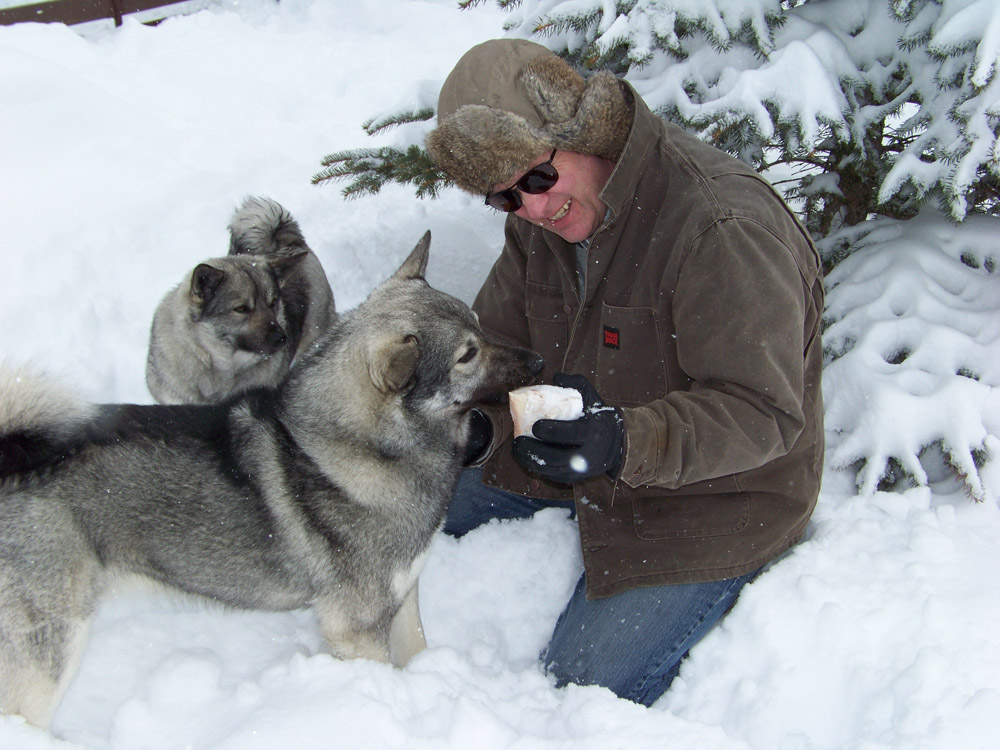 Norwegian Elkhound Litter Size