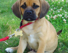 Puggle Images