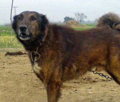 Images Of Dogs With There Breed Names