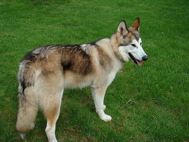 Good Native American Names For Dogs