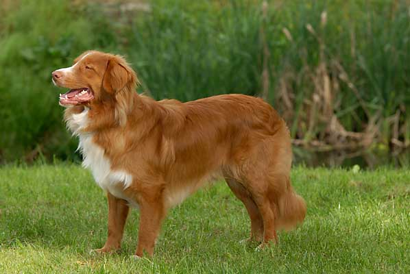 Water Rescue Dog Breeds