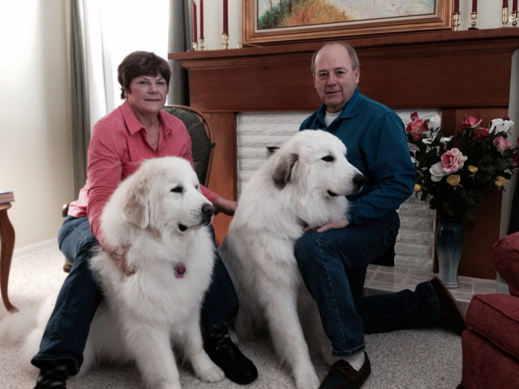 Great Pyrenees Dog Show