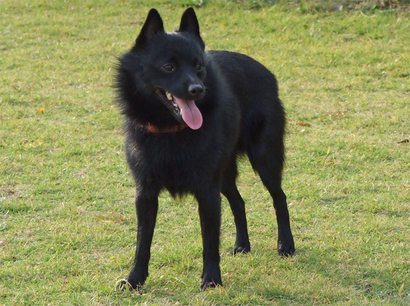 Good Names For Solid Black Dogs