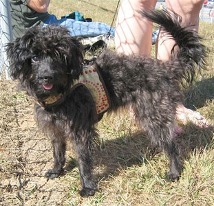 Rare Dog Breeds With Pictures