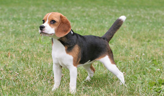 What Age Can A Boy Dog Breed