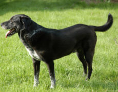 Lab-Pointer