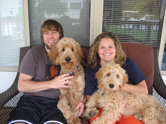 Toy (Petite) Goldendoodle Info, Temperament, Puppies ...