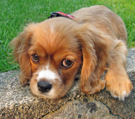 Small Black And Tan Dog Breeds