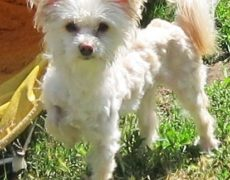 Chinese Crested Powder Puff Dog Names