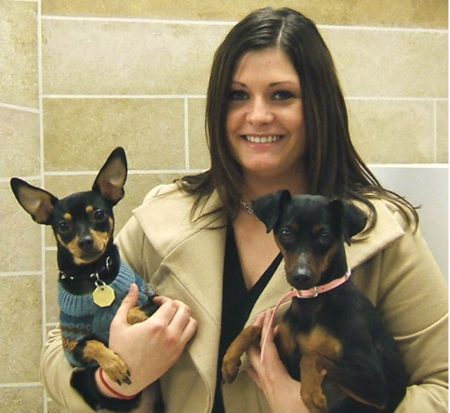 Chipin Dog (Miniature Pinscher-Chihuahua Mix) Info, Pictures