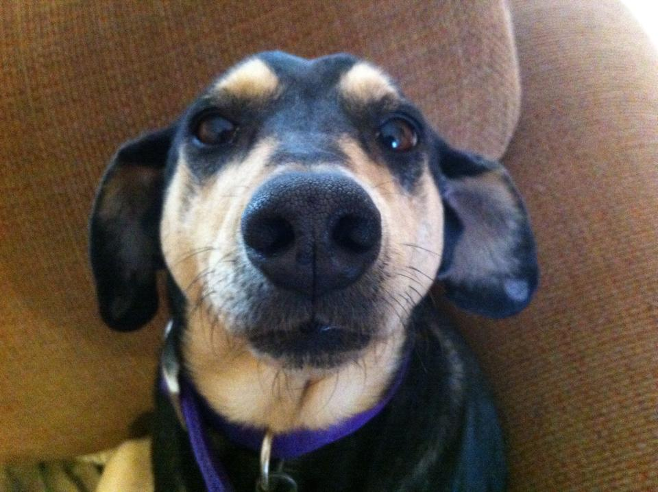Beagle Mix Dog Pictures