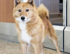 Pictures of Sulimov Dog
