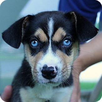 Hypoallergenic Dog With Blue Eyes