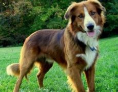 Medium Sized Dog Breeds Pictures