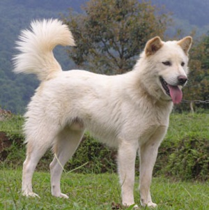 Cute White Fluffy Dog Breeds
