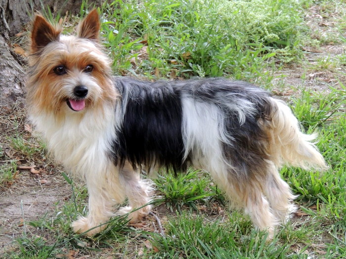 Small Dog Breeds For Older Adults