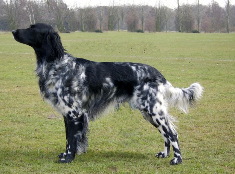 Large Dog Breeds And Names