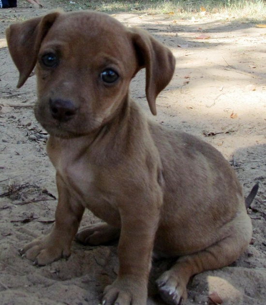 Lifespan Of Small Mixed Breed Dogs