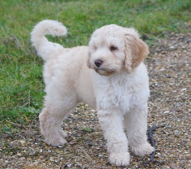 Dog Breeds From Frane