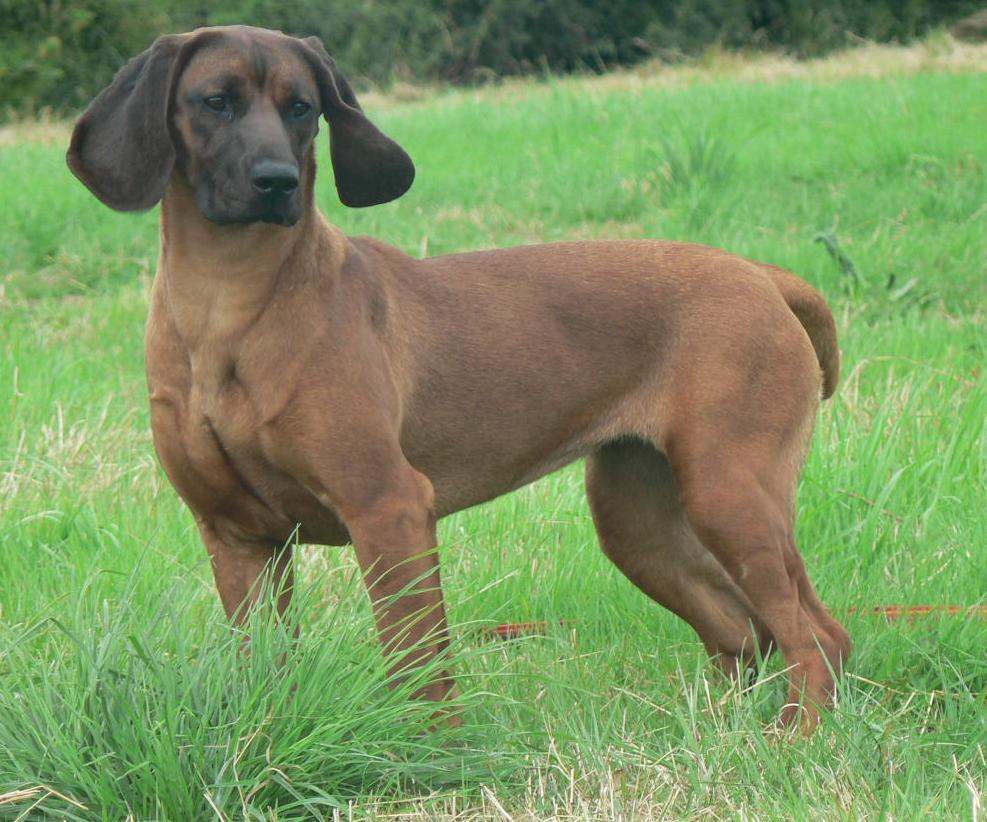 Female Dog Names For Black And Tan Dogs