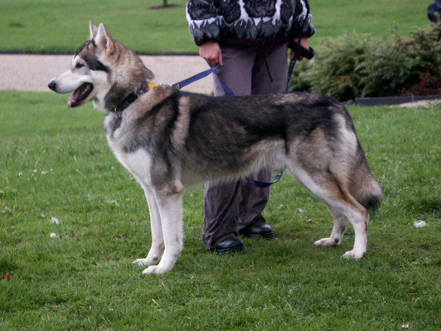 Hybrid Dog Breeds In India