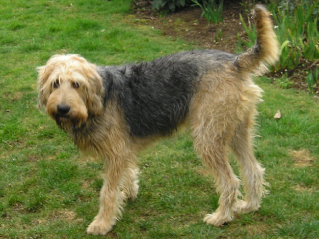 Dog Breeds With Large Litters