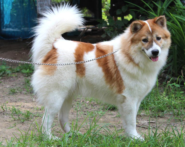 101dogbreeds Com Facts Information And Pictures