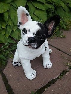 French Bulldog Poodle Mix