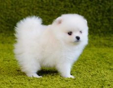 Dog Breeds That Start With C 101dogbreeds Com